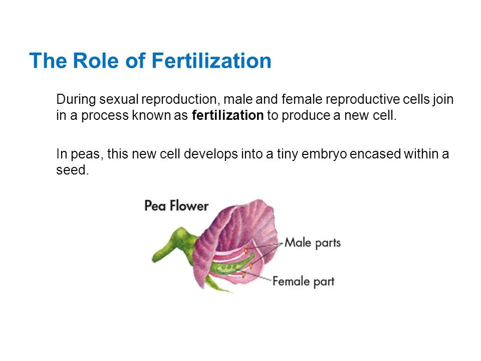 The Role of Fertilization