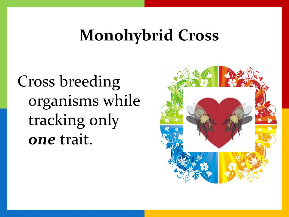 Monohybrid Cross Cross breeding organisms while tracking only one trait.