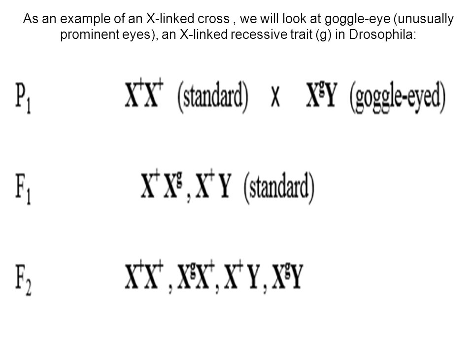 As an example of an X-linked cross , we will look at goggle-eye (unusually prominent eyes), an X-linked recessive trait (g) in Drosophila: