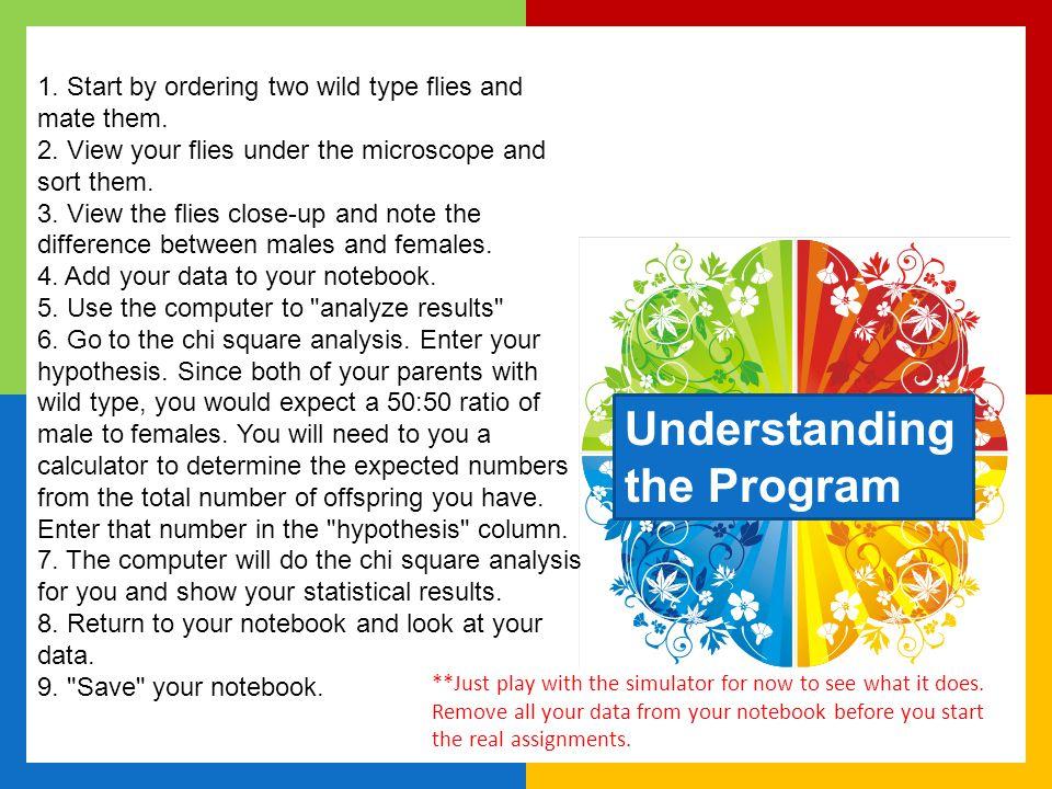 Understanding the Program