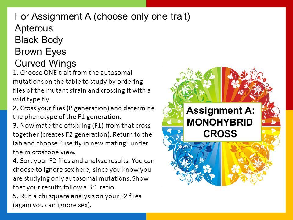 Assignment A: MONOHYBRID CROSS