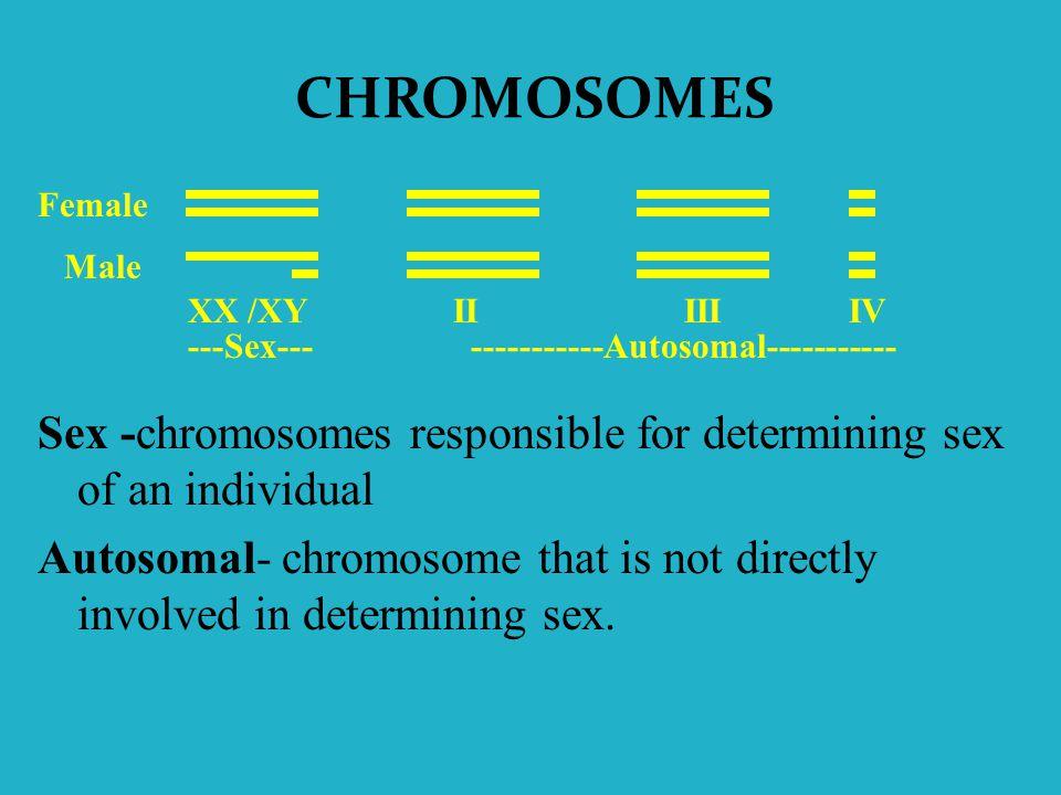 CHROMOSOMES Female. Male. XX /XY. II III IV. ---Sex--- -----------Autosomal-----------