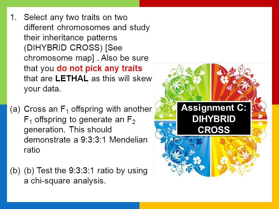 Assignment C: DIHYBRID CROSS