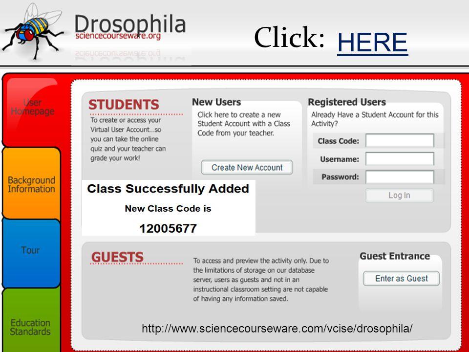 Click: HERE http://www.sciencecourseware.com/vcise/drosophila/