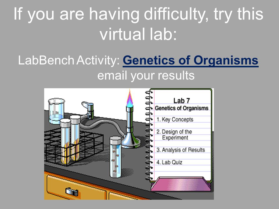If you are having difficulty, try this virtual lab: