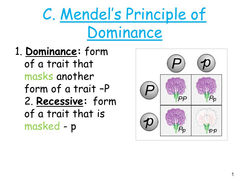 C. Mendel's Principle of Dominance