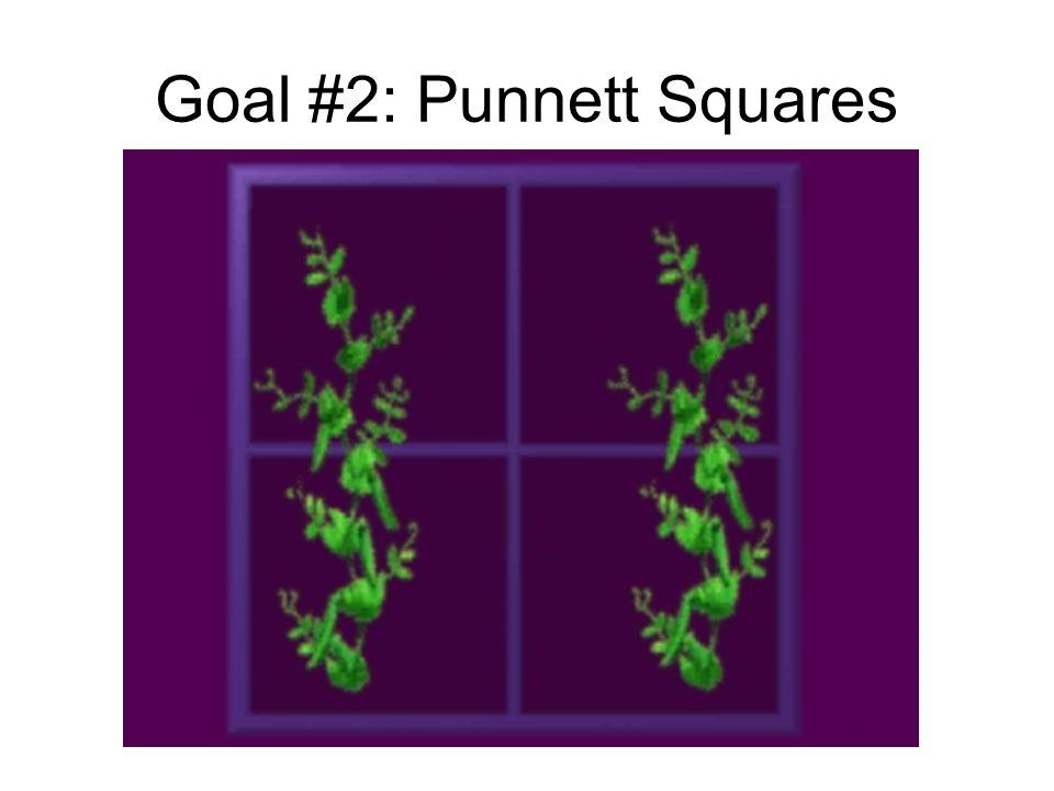 Goal #2: Punnett Squares