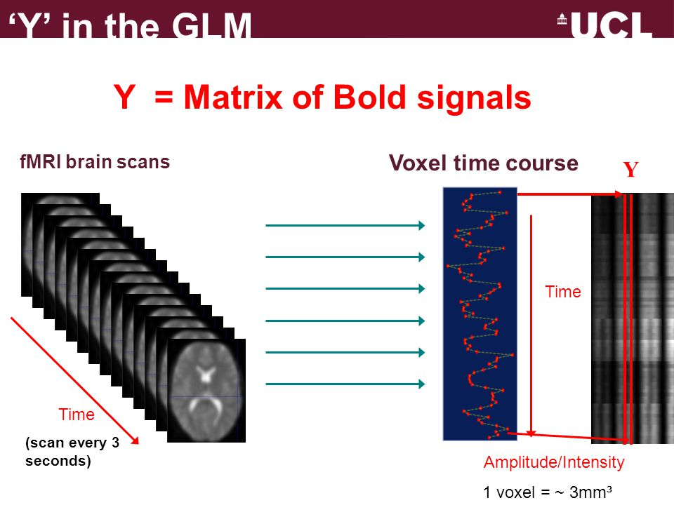 'Y' in the GLM Y = Matrix of Bold signals Voxel time course Y
