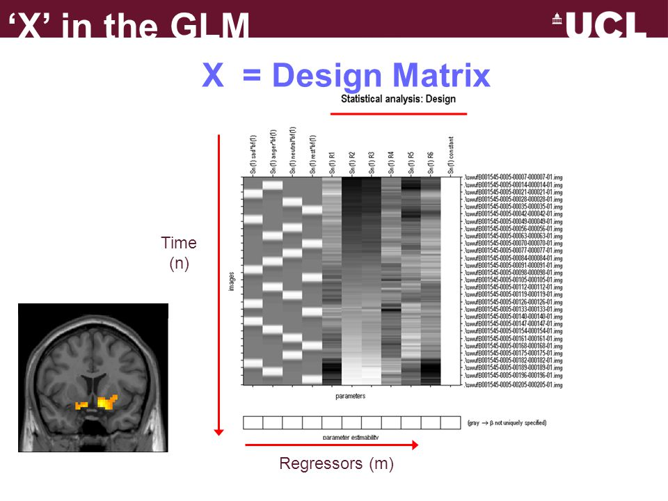 'X' in the GLM X = Design Matrix Time (n) Regressors (m)