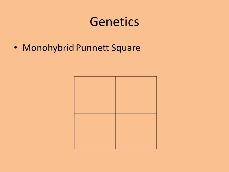 Genetics Monohybrid Punnett Square