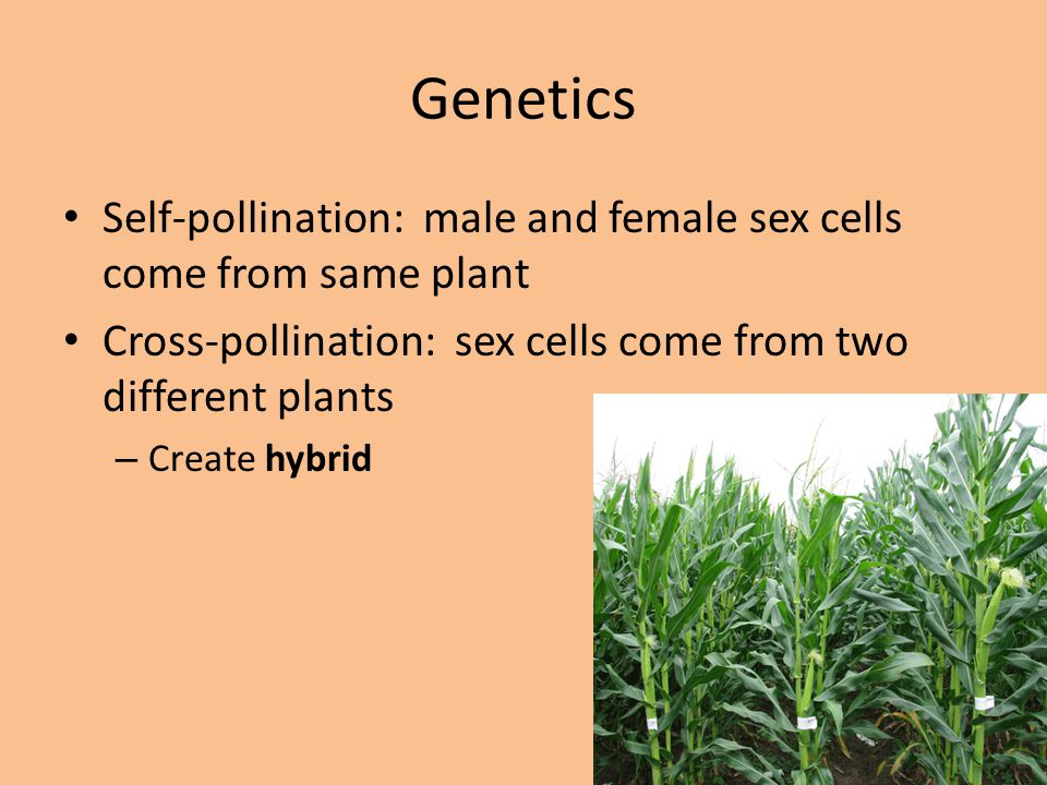 Genetics Self-pollination: male and female sex cells come from same plant. Cross-pollination: sex cells come from two different plants.