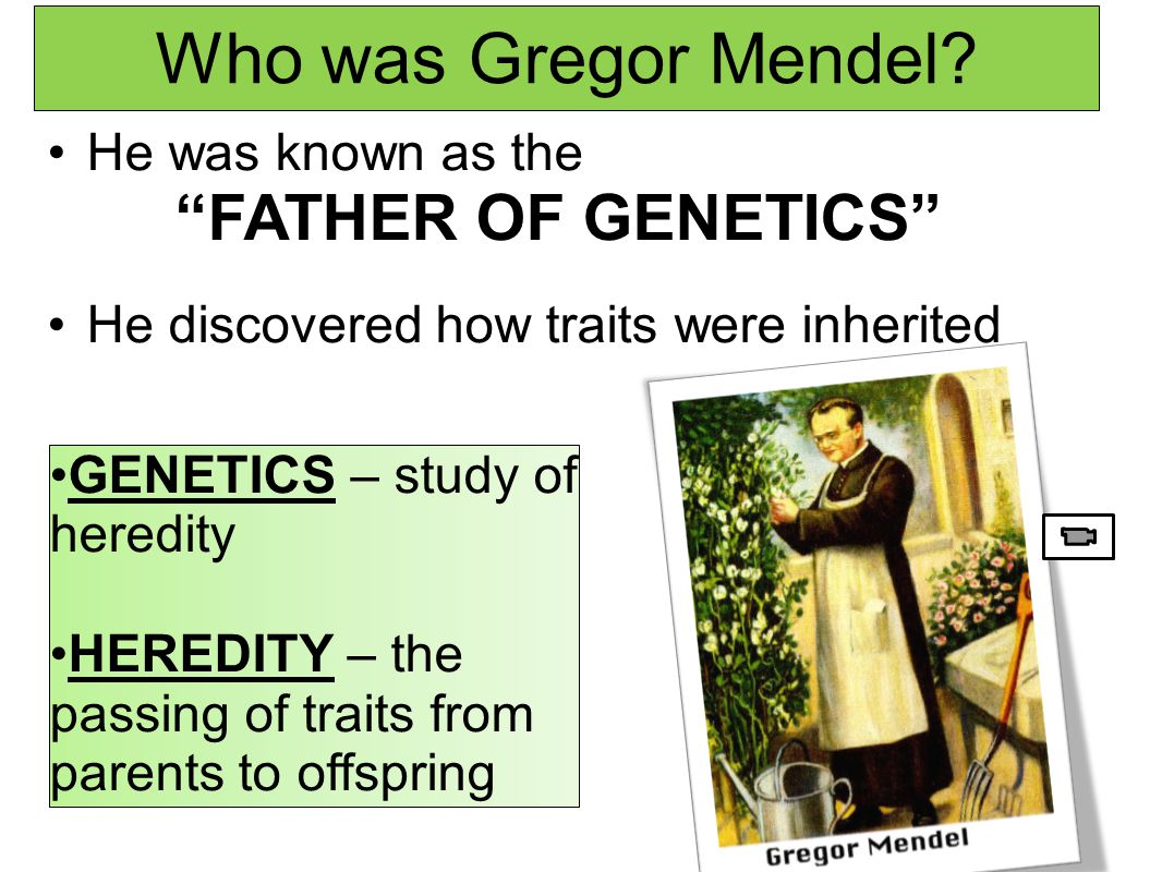 Who was Gregor Mendel FATHER OF GENETICS He was known as the