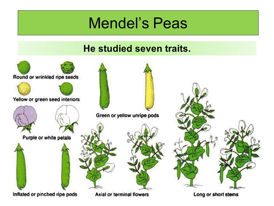 He studied seven traits.