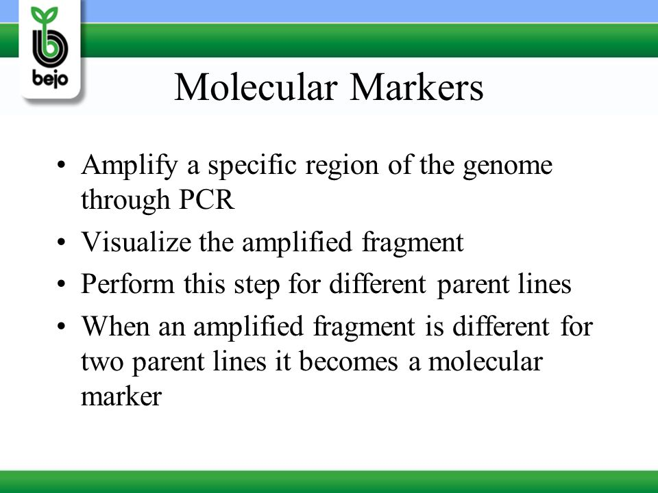 Molecular Markers Amplify a specific region of the genome through PCR