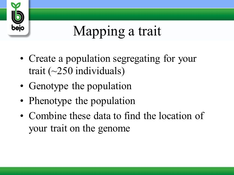 Mapping a trait Create a population segregating for your trait (~250 individuals) Genotype the population.