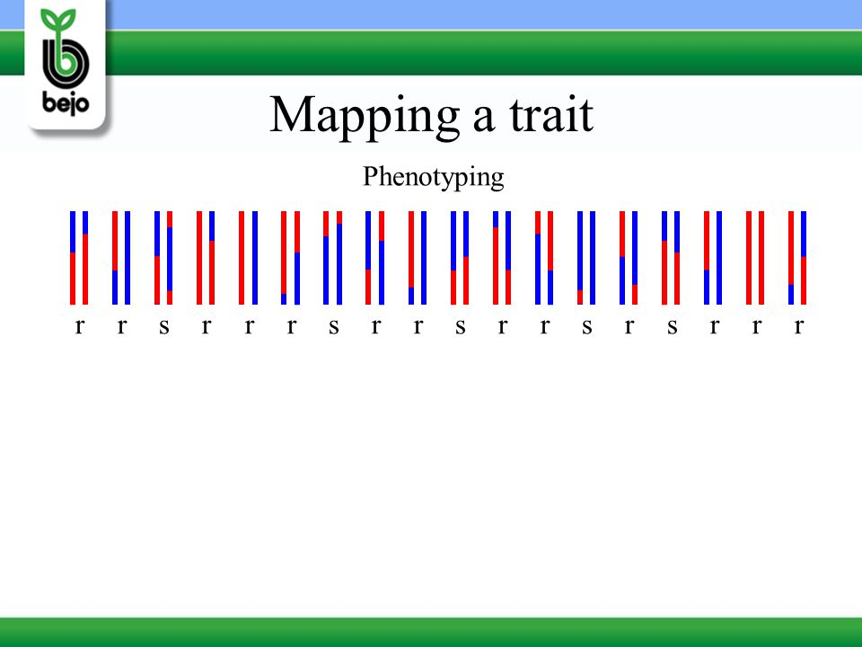 Mapping a trait Phenotyping r r s r r r s r r s r r s r s r r r