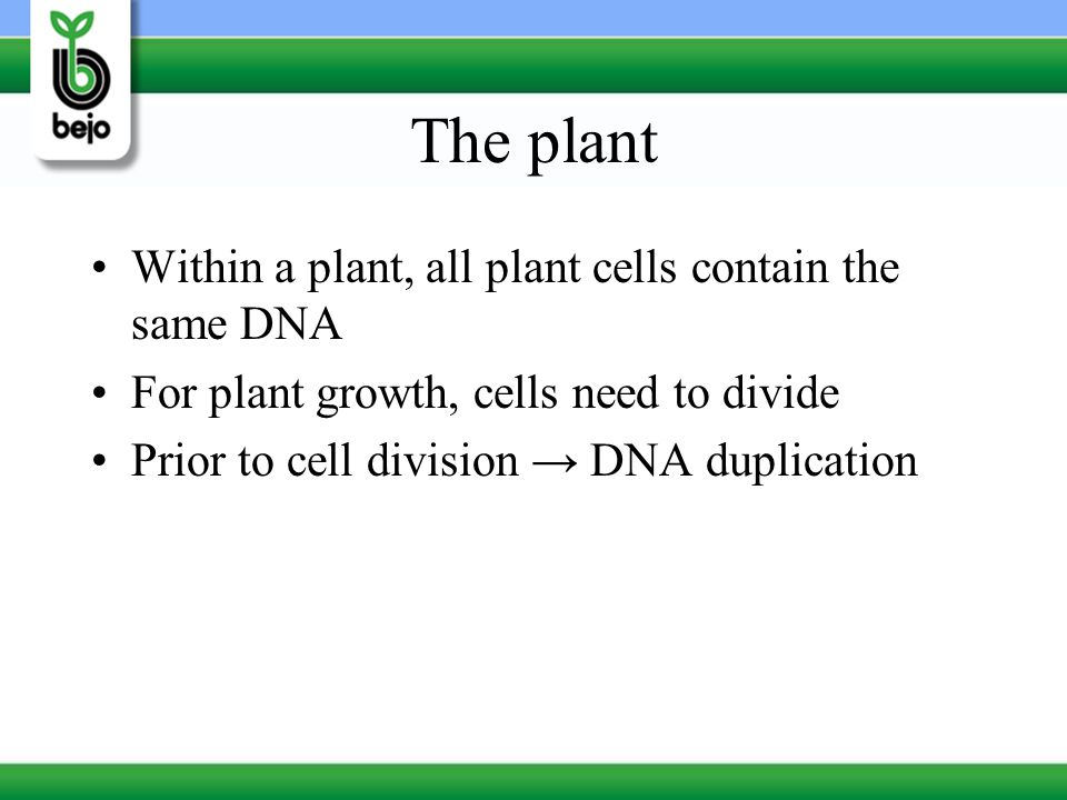 The plant Within a plant, all plant cells contain the same DNA