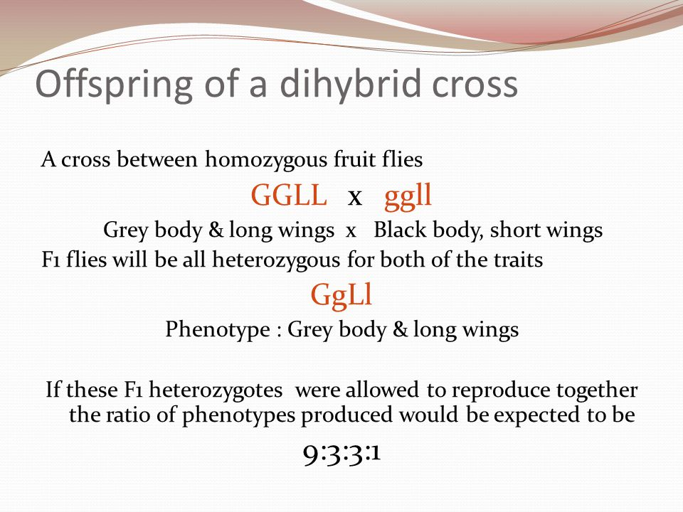 Offspring of a dihybrid cross