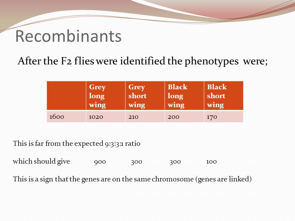 Recombinants After the F2 flies were identified the phenotypes were;
