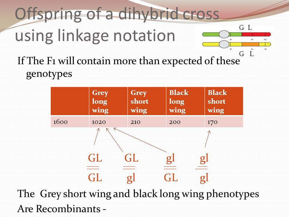 Offspring of a dihybrid cross using linkage notation