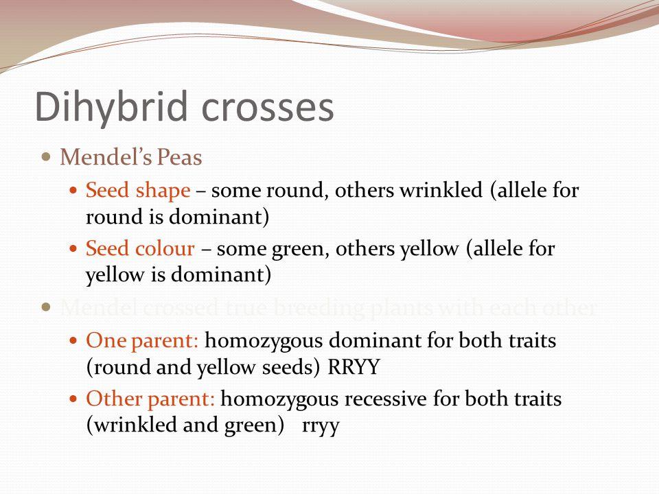 Dihybrid crosses Mendel's Peas