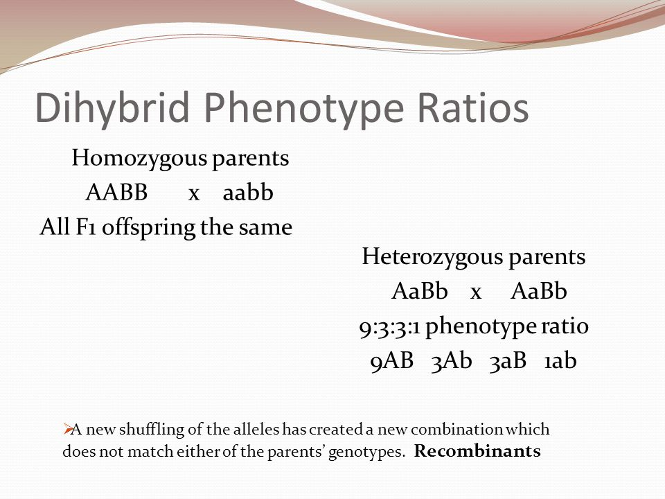 Dihybrid Phenotype Ratios