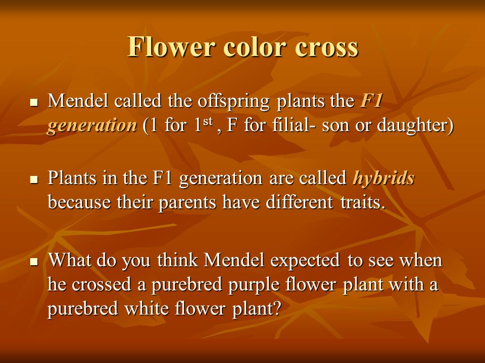 Flower color cross Mendel called the offspring plants the F1 generation (1 for 1st , F for filial- son or daughter)