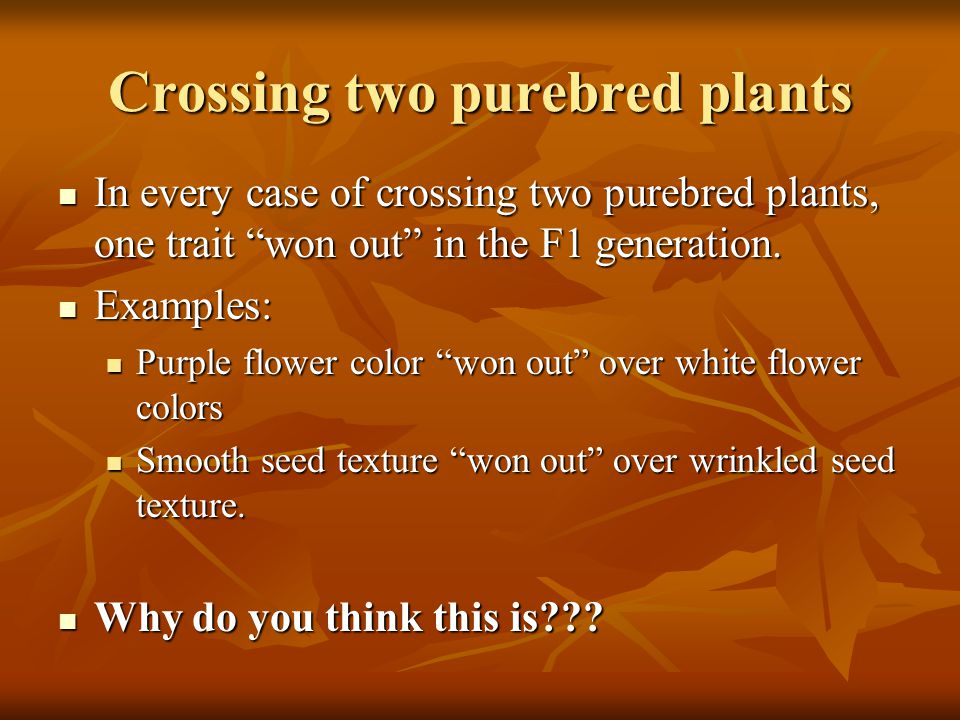 Crossing two purebred plants