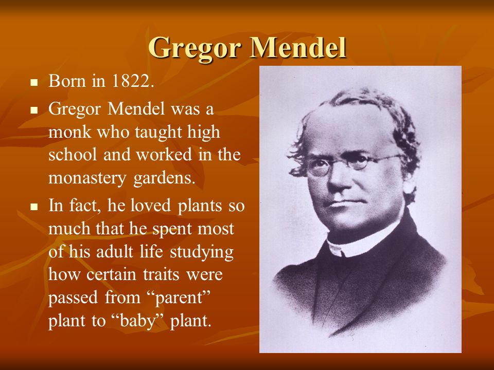 Gregor Mendel Born in 1822. Gregor Mendel was a monk who taught high school and worked in the monastery gardens.