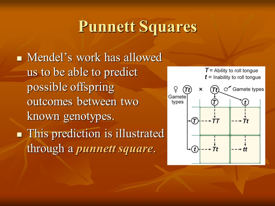 Punnett Squares Mendel's work has allowed us to be able to predict possible offspring outcomes between two known genotypes.