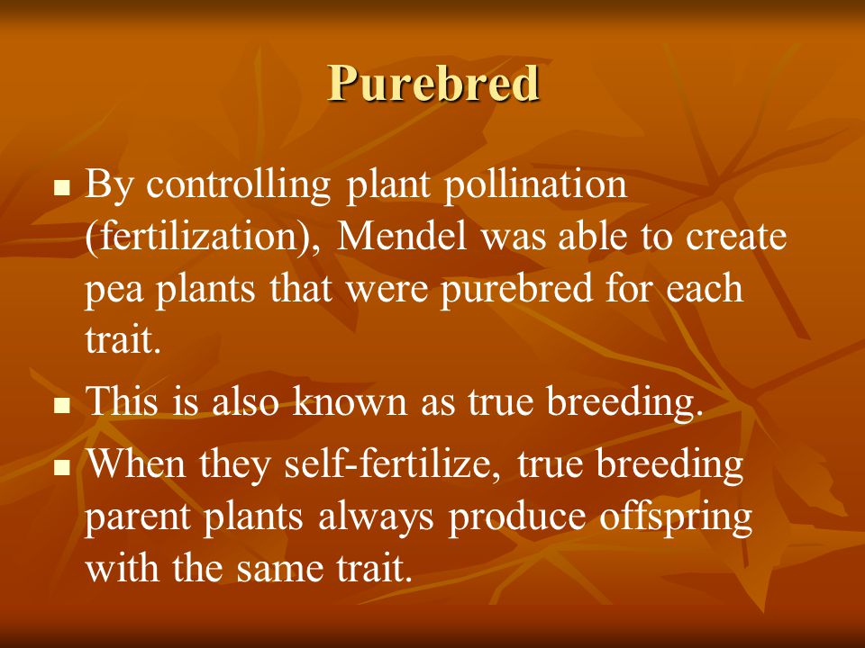 Purebred By controlling plant pollination (fertilization), Mendel was able to create pea plants that were purebred for each trait.