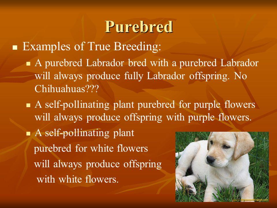 Purebred Examples of True Breeding: