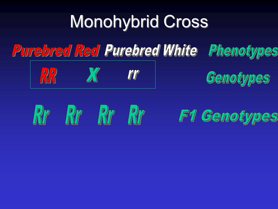 Monohybrid Cross Purebred Red Purebred White Phenotypes x Rr Rr Rr Rr