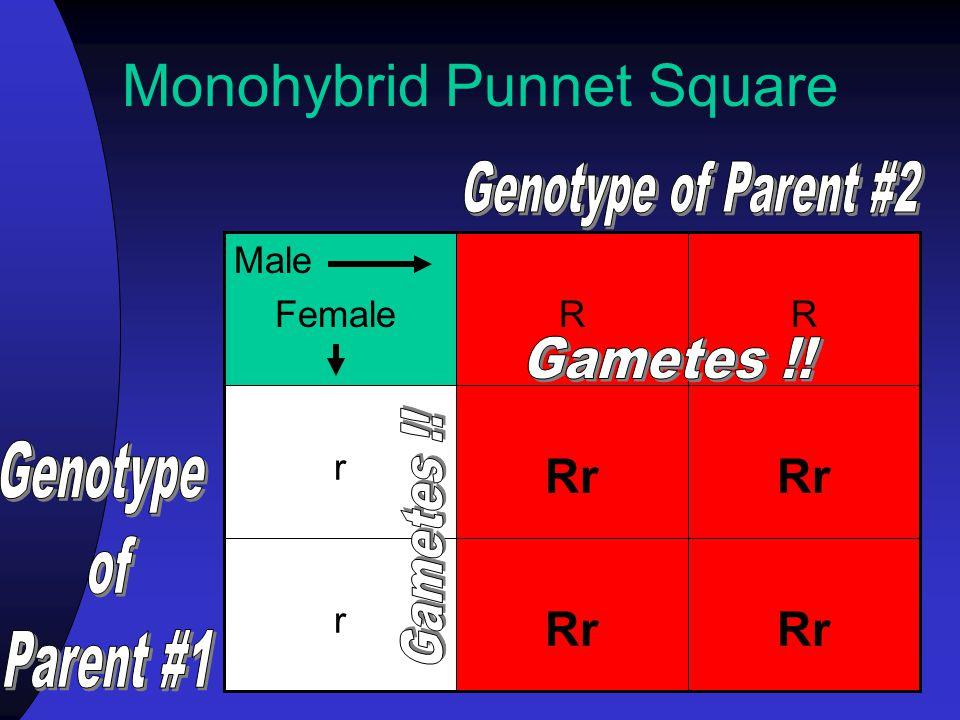 Monohybrid Punnet Square