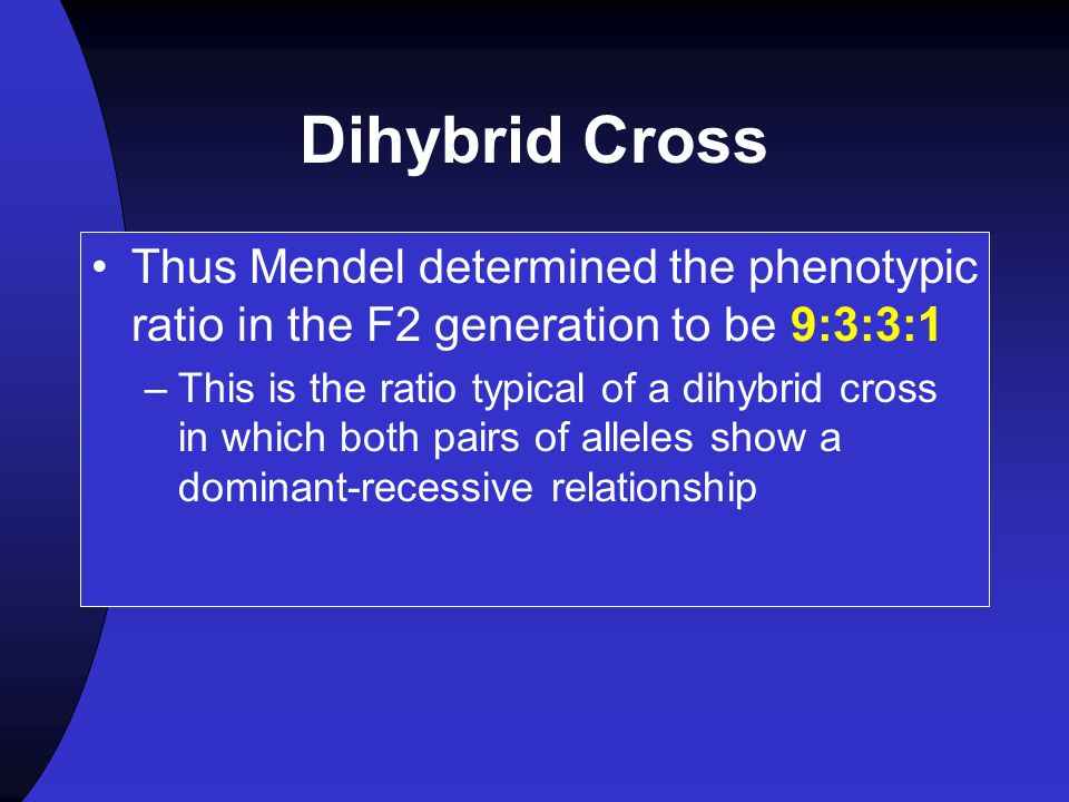 Dihybrid Cross Thus Mendel determined the phenotypic ratio in the F2 generation to be 9:3:3:1.