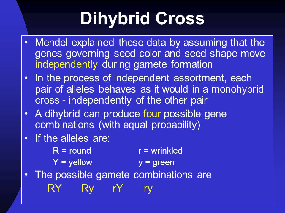 Dihybrid Cross Mendel explained these data by assuming that the genes governing seed color and seed shape move independently during gamete formation.