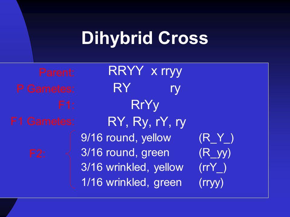 Dihybrid Cross RRYY x rryy RY ry RrYy RY, Ry, rY, ry Parent: