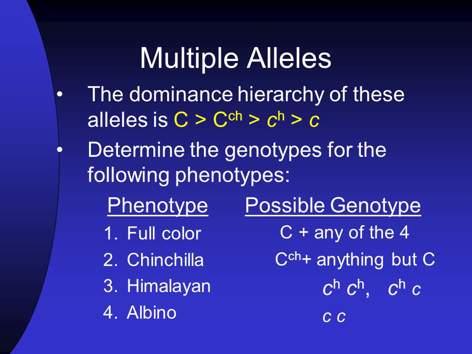 Multiple Alleles The dominance hierarchy of these alleles is C > Cch > ch > c. Determine the genotypes for the following phenotypes: