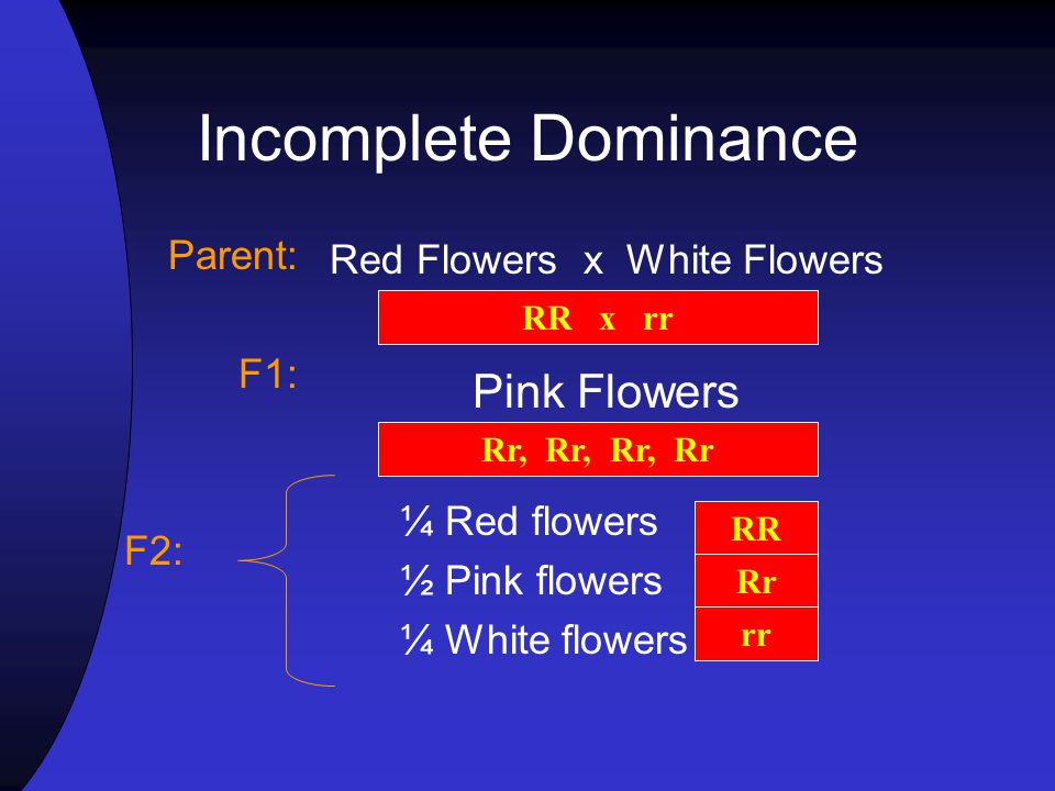 Red Flowers x White Flowers