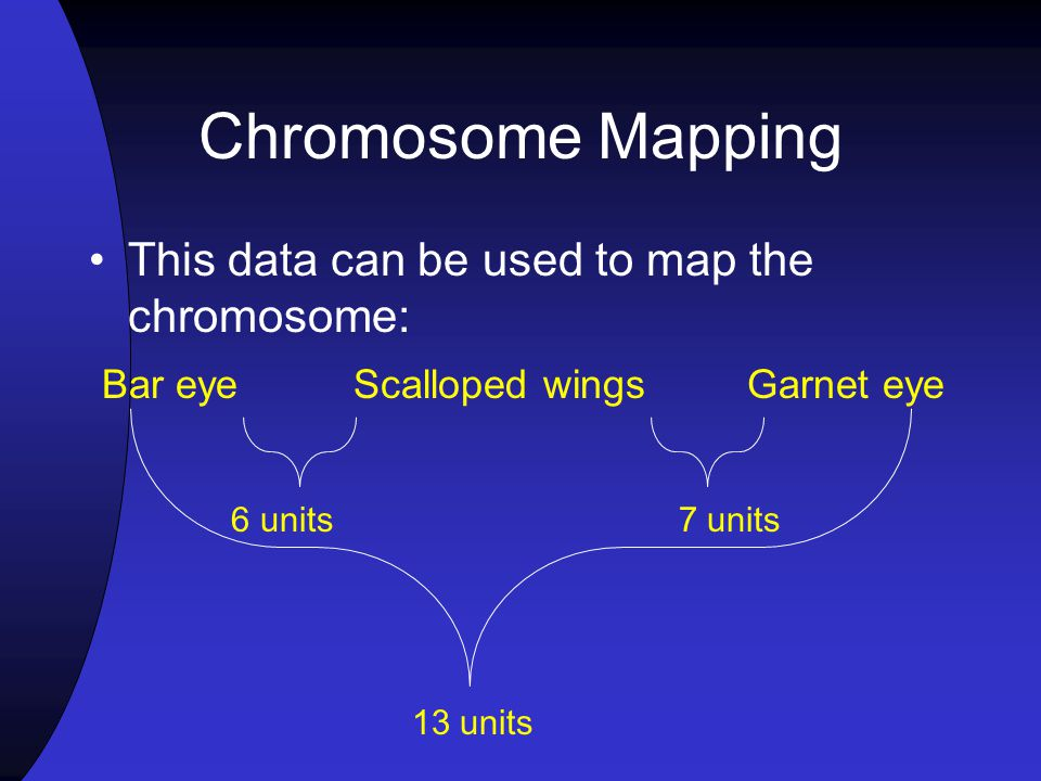 Chromosome Mapping This data can be used to map the chromosome: