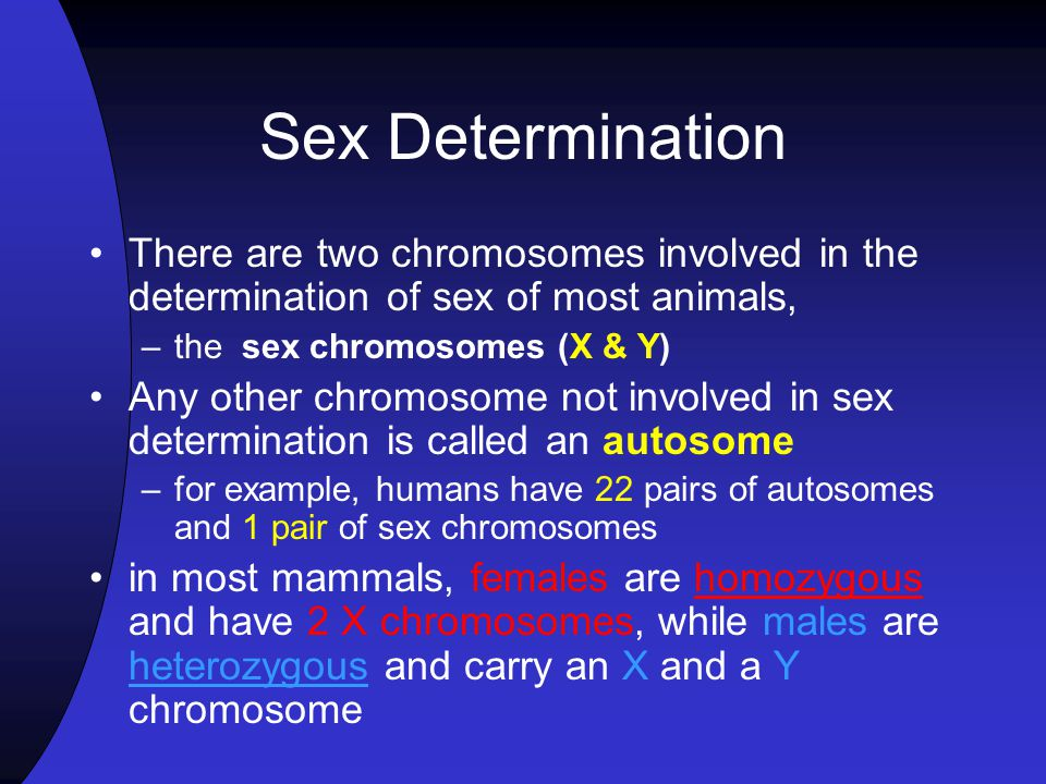 Sex Determination There are two chromosomes involved in the determination of sex of most animals, the sex chromosomes (X & Y)