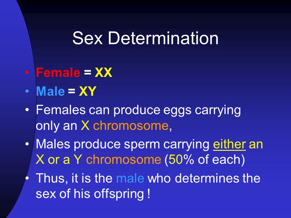 Sex Determination Female = XX Male = XY