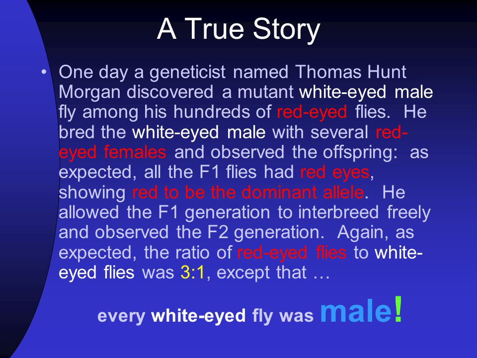 every white-eyed fly was male!