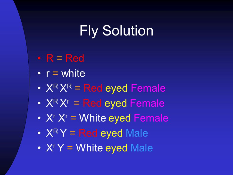 Fly Solution R = Red r = white XR XR = Red eyed Female