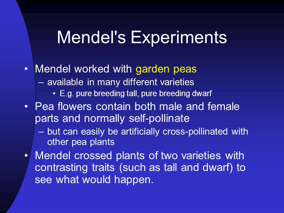 Mendel s Experiments Mendel worked with garden peas