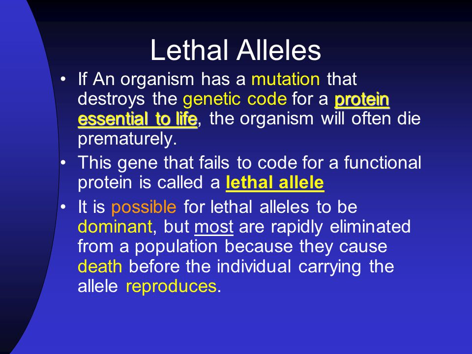 Lethal Alleles If An organism has a mutation that destroys the genetic code for a protein essential to life, the organism will often die prematurely.