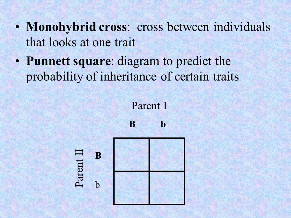 Monohybrid cross: cross between individuals that looks at one trait