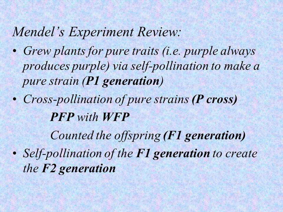 Mendel's Experiment Review: