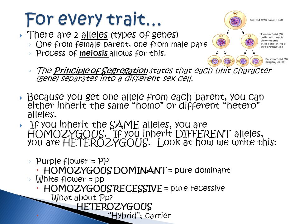 For every trait… There are 2 alleles (types of genes)
