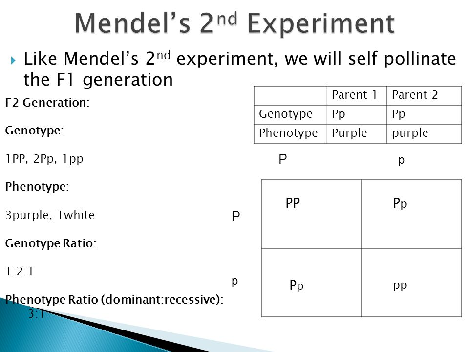 Mendel's 2nd Experiment